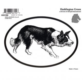 Haddington Green Black/White Border Collie Oval Decal