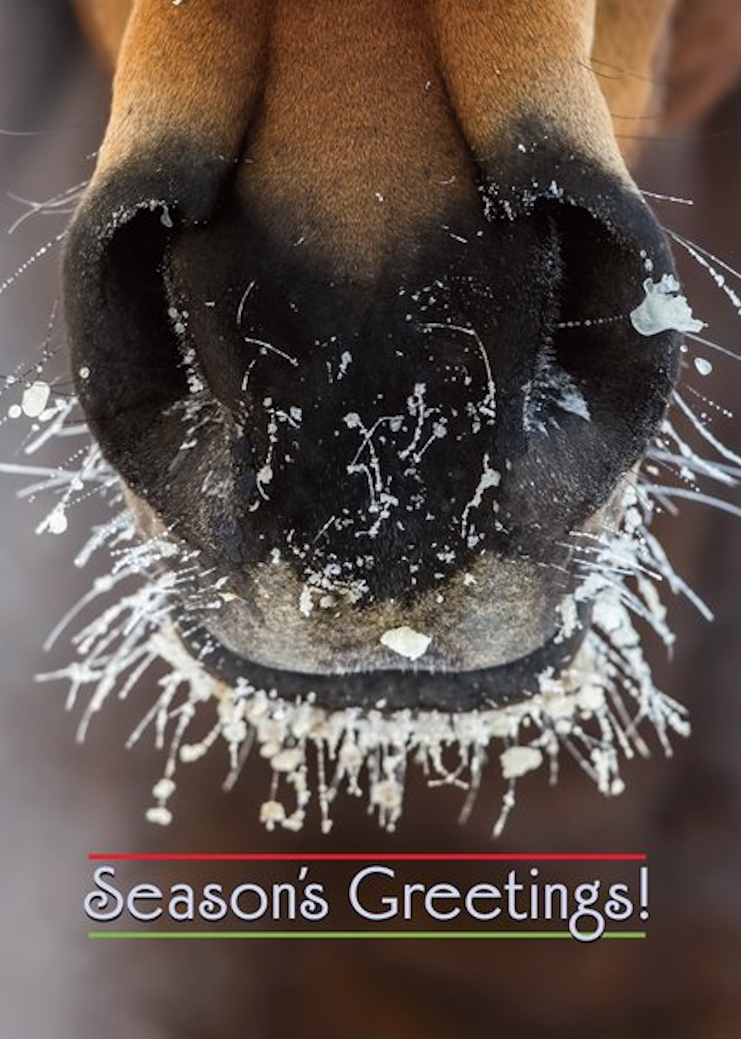 Frosty Muzzle with Season's Greetings Horse Boxed Cards