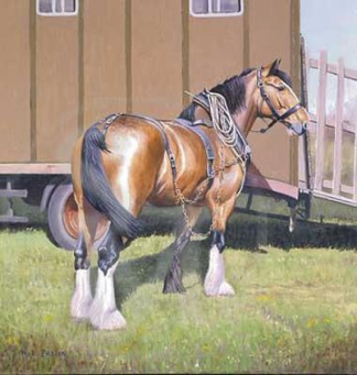 Handsome Clydesdale Horse Greeting Card