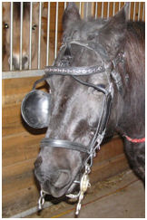 Bridle being held in place by can't rub off bridle