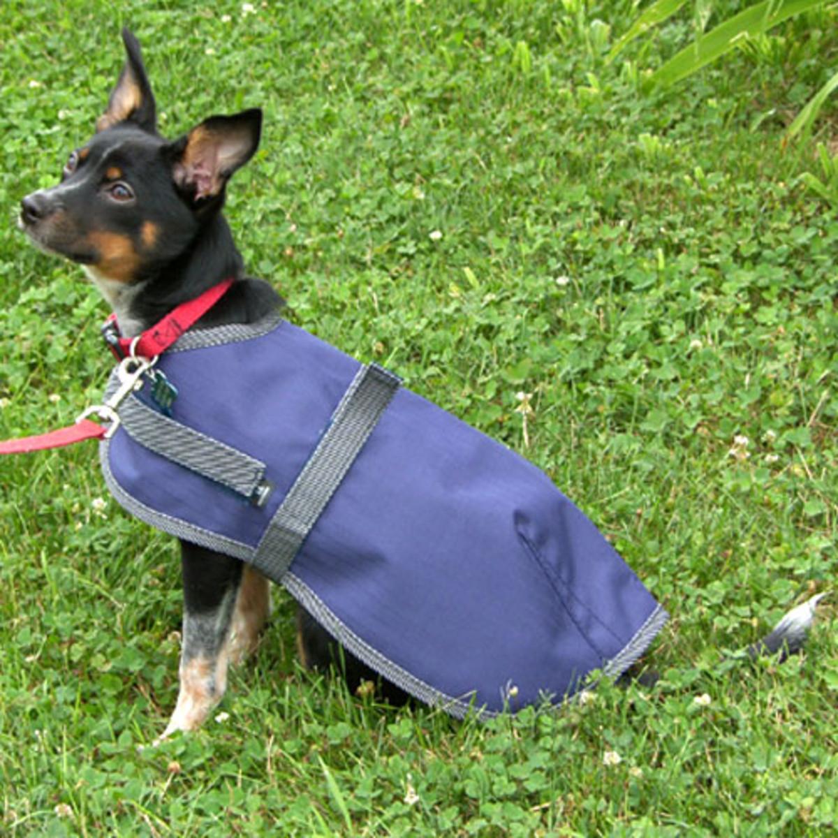 Rain Walker Dog Rain Sheets - Intrepid International
